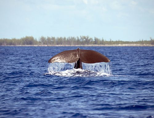 Bahamas Marine Mammals Research Organisation (BMMRO) – Day & Work