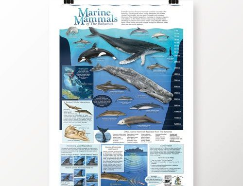 Bahamas Marine Mammals Research Organisation (BMMRO) news